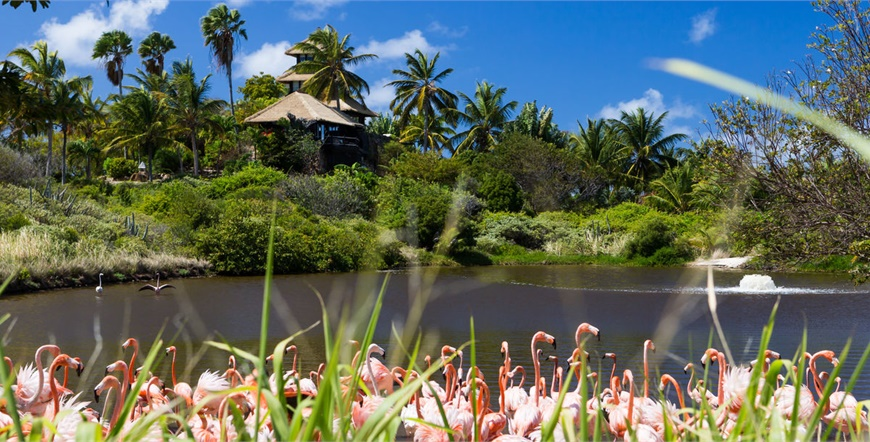 Necker Island Luxury Private Island - Virgin Limited Edition