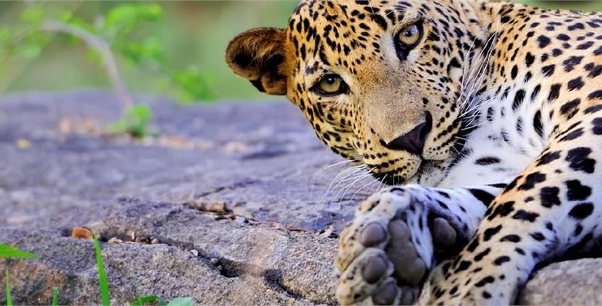 Šri Lanka-Wildlife Safari